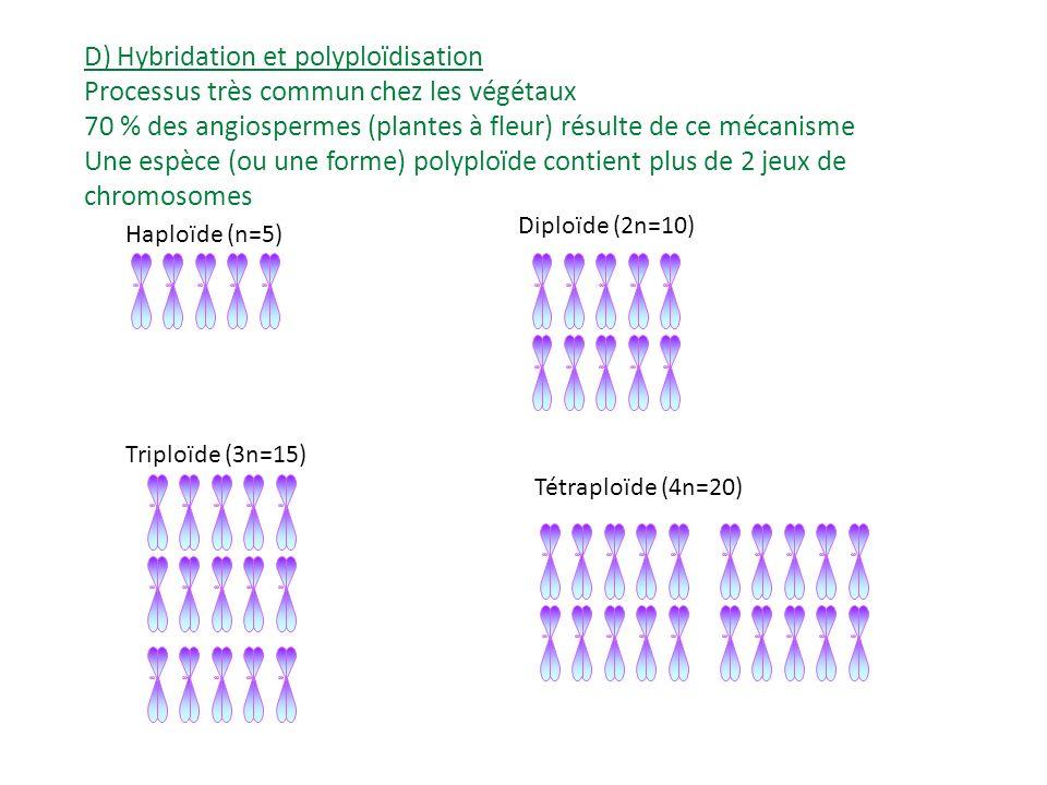 Espèce AEspèce B Méiose => formation des gamètes n=6n=5 Hybridation Hybride stérile (pas de méiose possible) Polyploïdisation Hybride fertile (méiose possible).