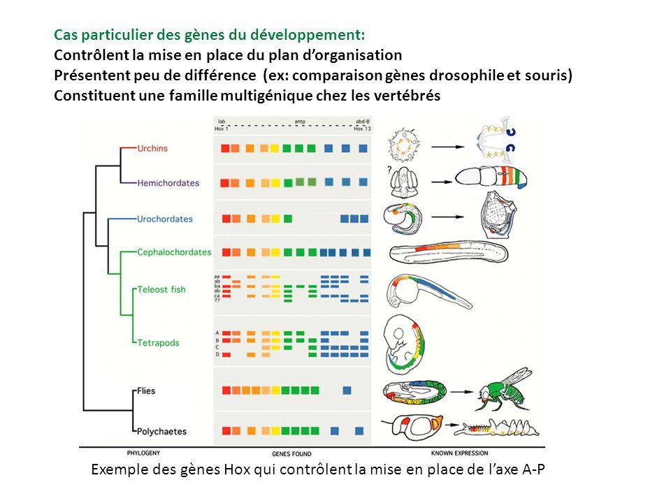 Cas particulier des gènes du développement: Contrôlent la mise en place du plan dorganisation Présentent peu de différence (ex: comparaison gènes dros
