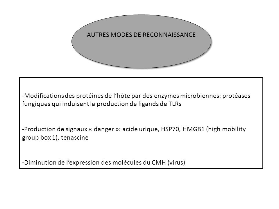 AUTRES MODES DE RECONNAISSANCE -Modifications des protéines de lhôte par des enzymes microbiennes: protéases fungiques qui induisent la production de
