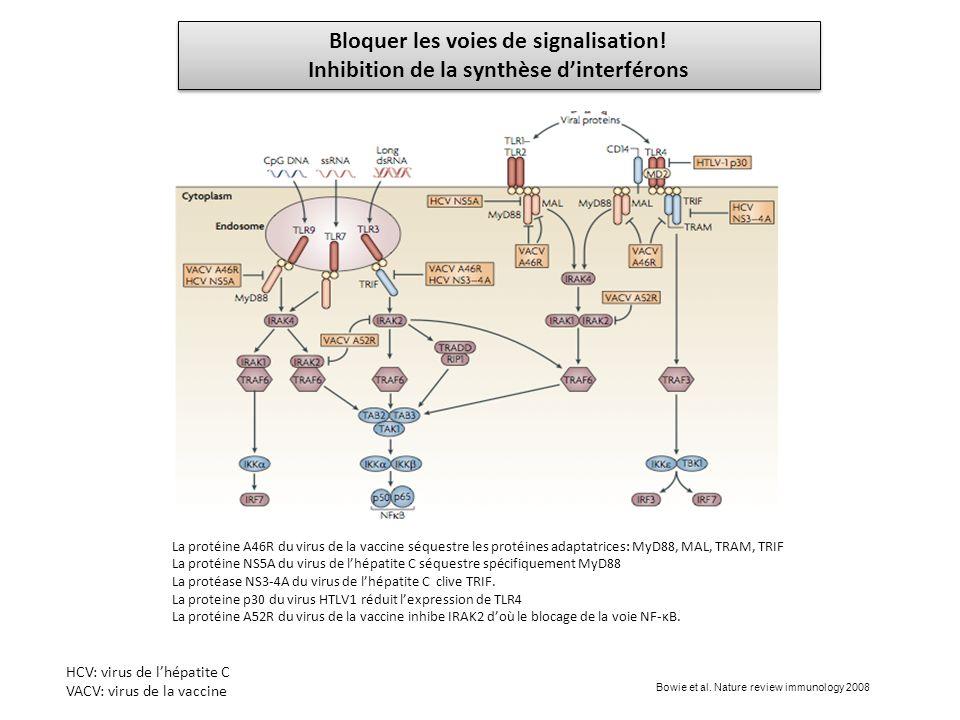 Bloquer les voies de signalisation! Inhibition de la synthèse dinterférons Bloquer les voies de signalisation! Inhibition de la synthèse dinterférons