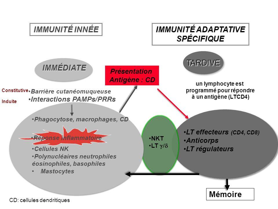 IMMÉDIATE IMMUNITÉ INNÉE TARDIVETARDIVE un lymphocyte est programmé pour répondre à un antigène (LTCD4) Mémoire Présentation Antigène : CD IMMUNITÉ AD