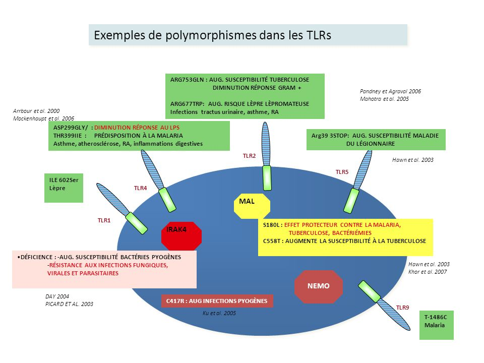 ASP299GLY/ : DIMINUTION RÉPONSE AU LPS THR399IIE : PRÉDISPOSITION À LA MALARIA Asthme, atherosclérose, RA, inflammations digestives TLR4 ARG753GLN : A