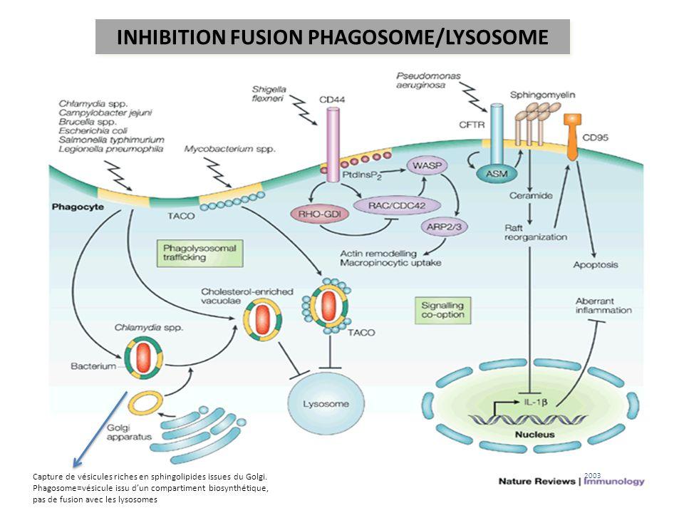 2,5 10 6 /an Cellules cibles: macrophages alvéolaires (RFc, mannose, scavenger) Survie dans les phagosomes .