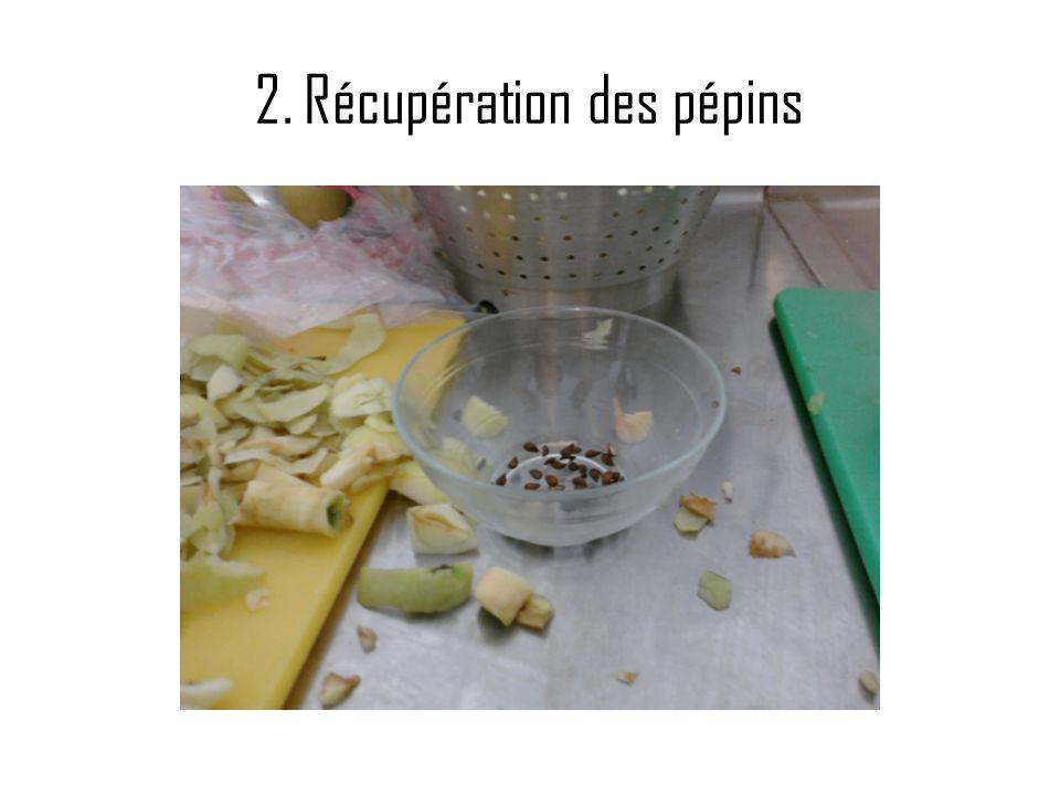 2. Récupération des pépins
