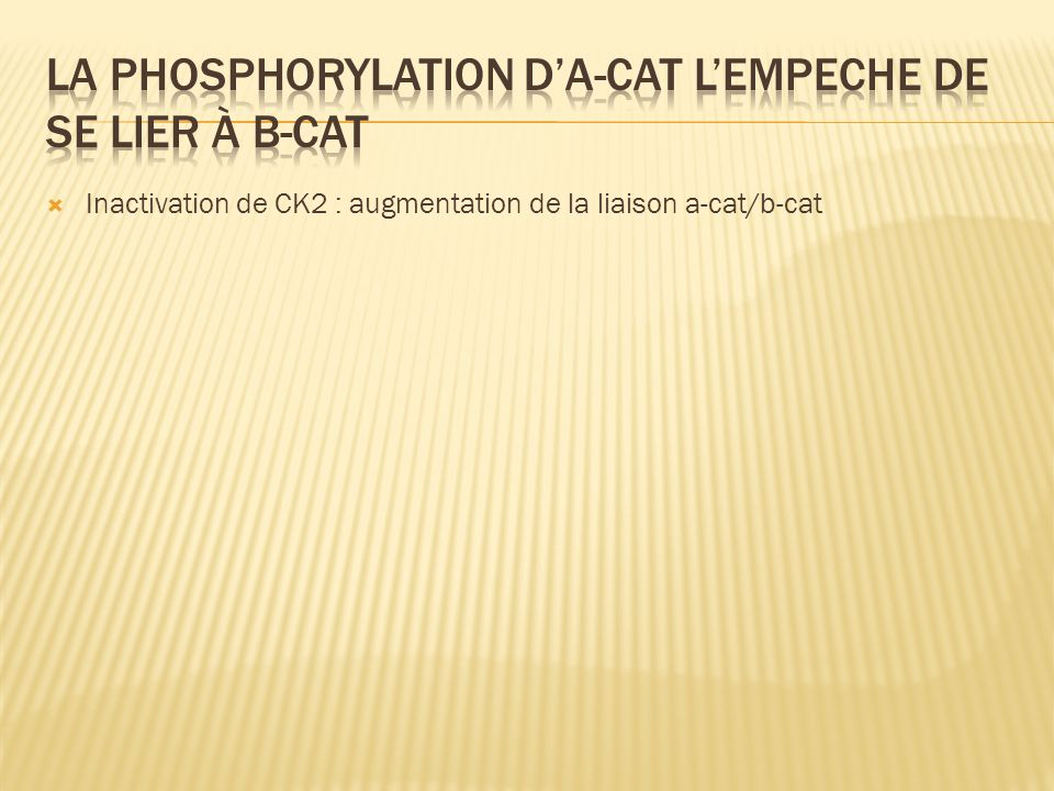 Inactivation de CK2 : augmentation de la liaison a-cat/b-cat