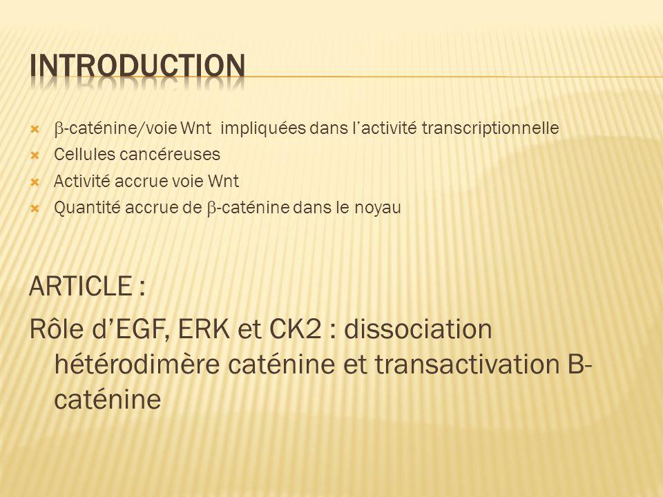 -caténine/voie Wnt impliquées dans lactivité transcriptionnelle Cellules cancéreuses Activité accrue voie Wnt Quantité accrue de -caténine dans le noy