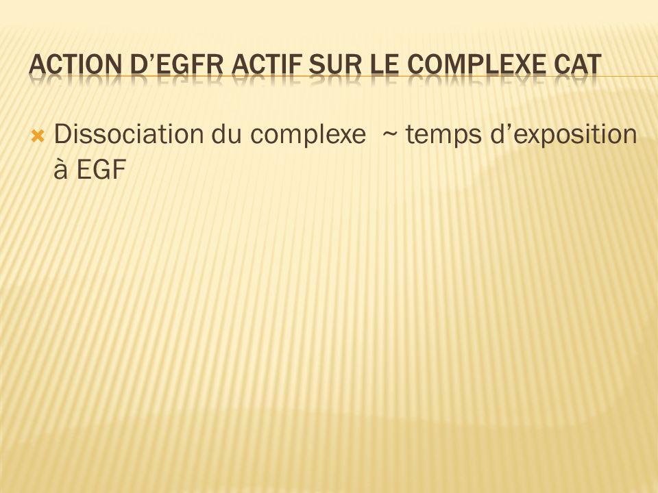 Dissociation du complexe ~ temps dexposition à EGF