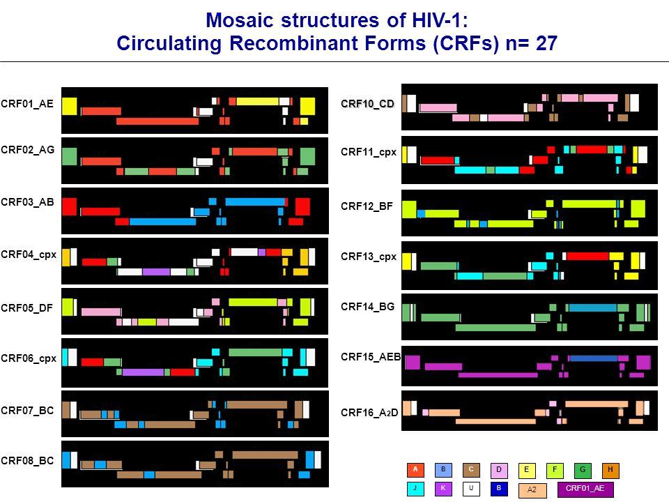 Mosaic structures of HIV-1: Circulating Recombinant Forms (CRFs) n= 27 CRF01_AE CRF03_AB CRF02_AG CRF04_cpx CRF05_DF CRF06_cpx CRF07_BC CRF08_BC CRF10_CD CRF11_cpx CRF12_BF CRF13_cpx CRF14_BG CRF15_AEB CRF16_A 2 D ABC DEFGH JKUB A2 CRF01_AE