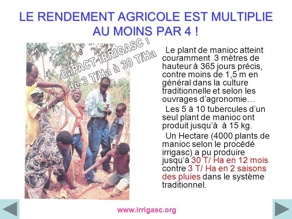 LE RENDEMENT AGRICOLE EST MULTIPLIE AU MOINS PAR 4 ! Le plant de manioc atteint couramment 3 mètres de hauteur à 365 jours précis, contre moins de 1,5