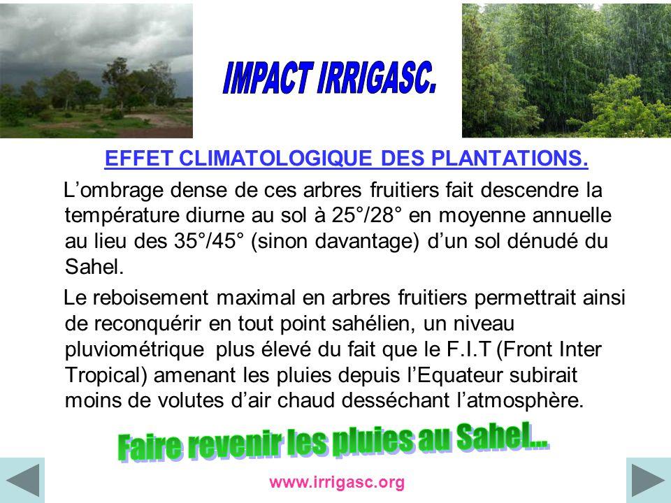 EFFET CLIMATOLOGIQUE DES PLANTATIONS. Lombrage dense de ces arbres fruitiers fait descendre la température diurne au sol à 25°/28° en moyenne annuelle