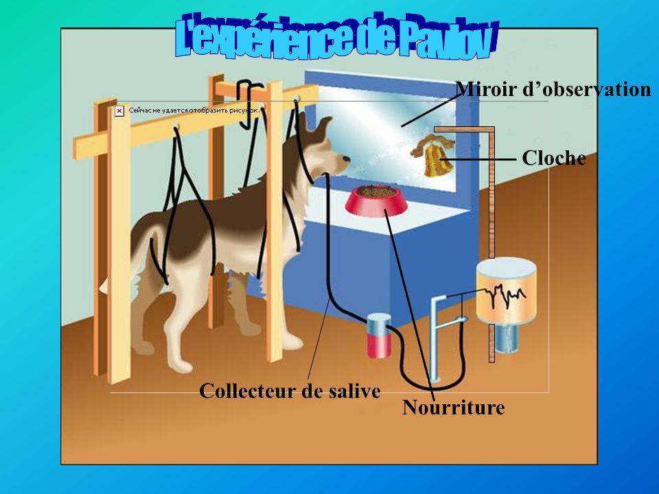 Exemple dexpérience avec les chiens: le conditionnement de la salivation au son d une clochette qui représente larrivée de sa nourriture.