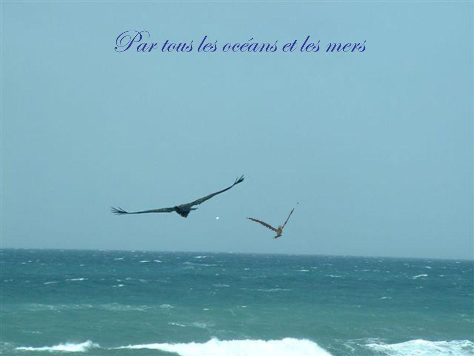 Par tous les océans et les mers