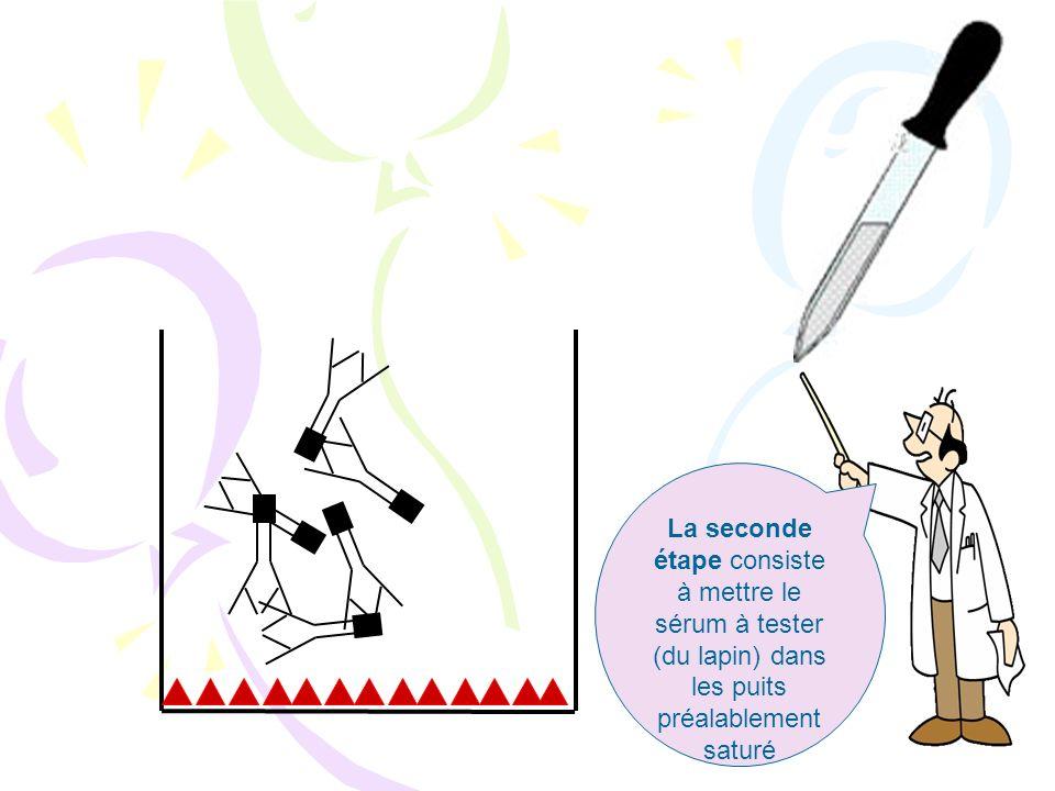 La première étape : le « cotting » consiste à tapisser le fond des puits avec la BSA (par effet électrostatique)