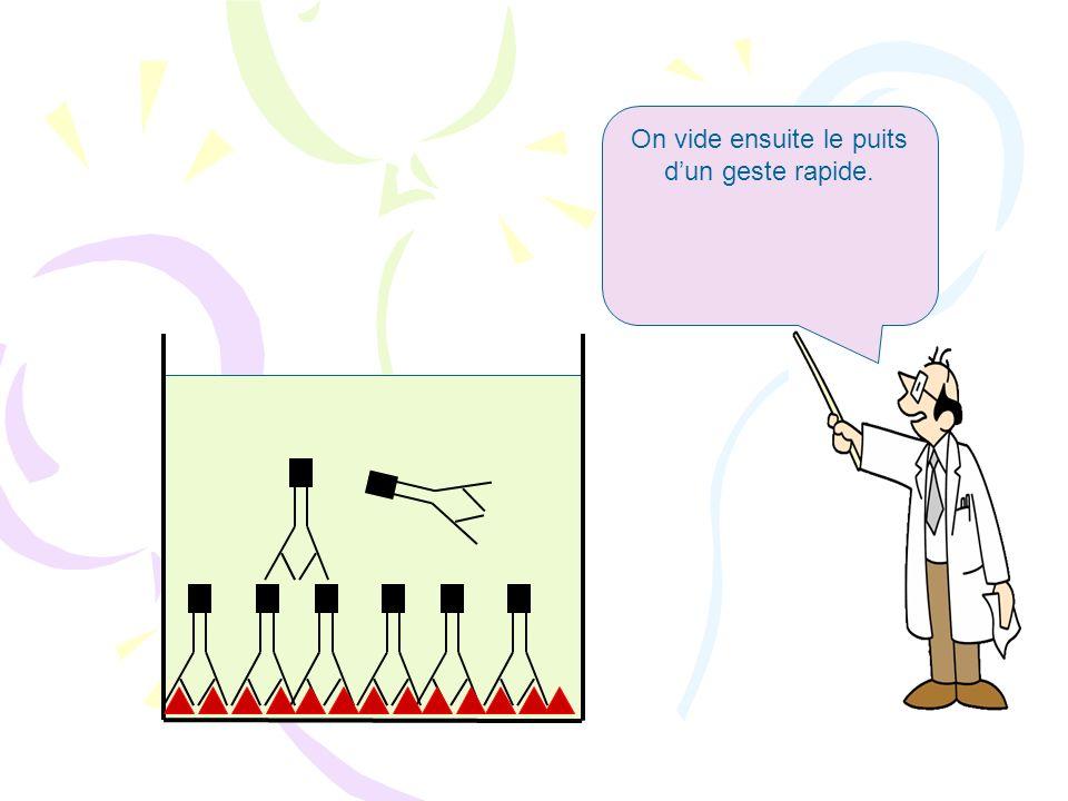 Ces anticorps anti-BSA viennent se fixer sur la BSA qui tapisse le fond du puits.