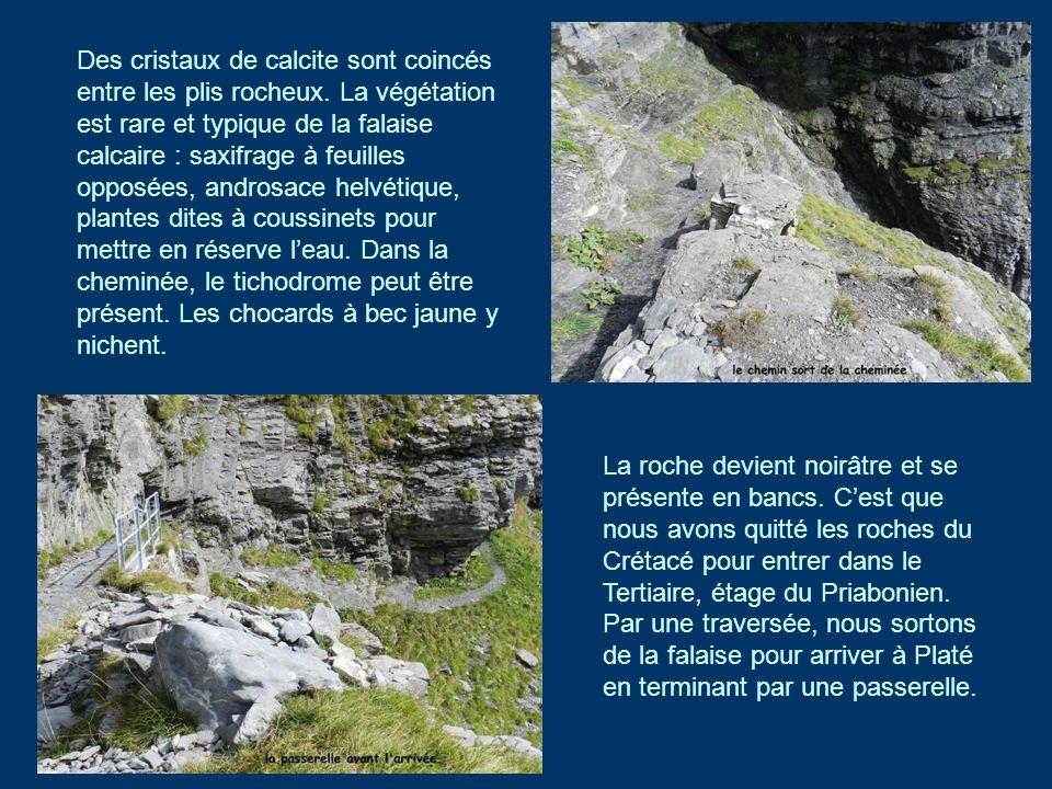 Des cristaux de calcite sont coincés entre les plis rocheux. La végétation est rare et typique de la falaise calcaire : saxifrage à feuilles opposées,