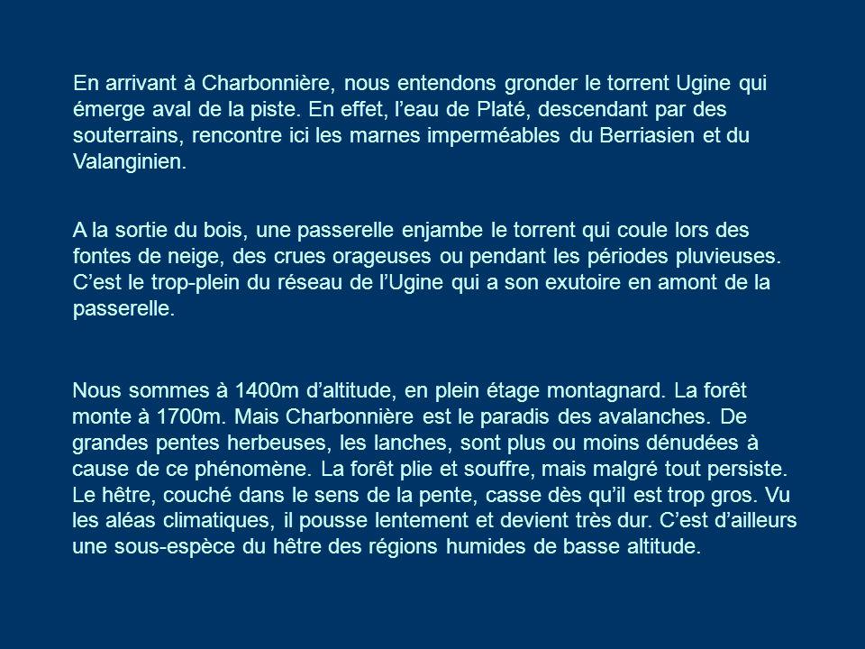 En arrivant à Charbonnière, nous entendons gronder le torrent Ugine qui émerge aval de la piste. En effet, leau de Platé, descendant par des souterrai