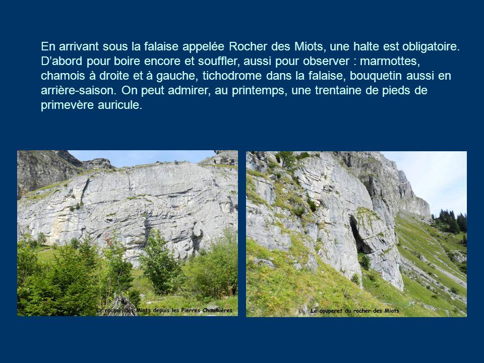 En arrivant sous la falaise appelée Rocher des Miots, une halte est obligatoire. Dabord pour boire encore et souffler, aussi pour observer : marmottes