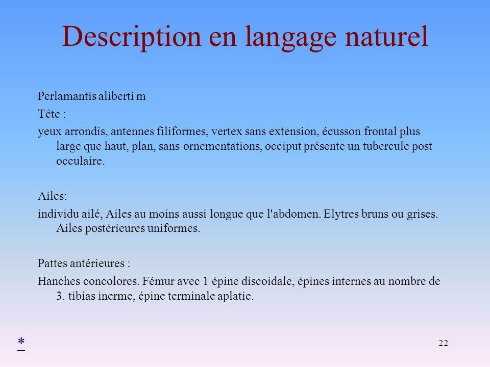 22 Description en langage naturel Perlamantis aliberti m Tête : yeux arrondis, antennes filiformes, vertex sans extension, écusson frontal plus large