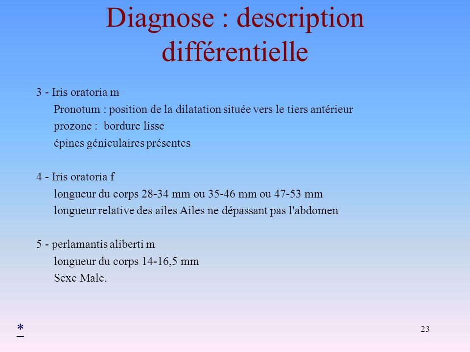23 Diagnose : description différentielle 3 - Iris oratoria m Pronotum : position de la dilatation située vers le tiers antérieur prozone : bordure lis