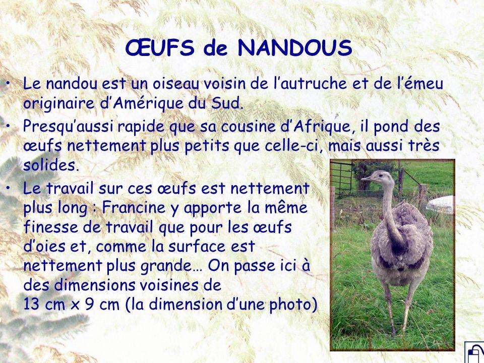 ŒUFS de NANDOUS Le nandou est un oiseau voisin de lautruche et de lémeu originaire dAmérique du Sud. Presquaussi rapide que sa cousine dAfrique, il po
