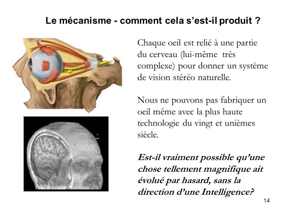 14 Le mécanisme - comment cela sest-il produit ? Chaque oeil est relié à une partie du cerveau (lui-même très complexe) pour donner un système de visi