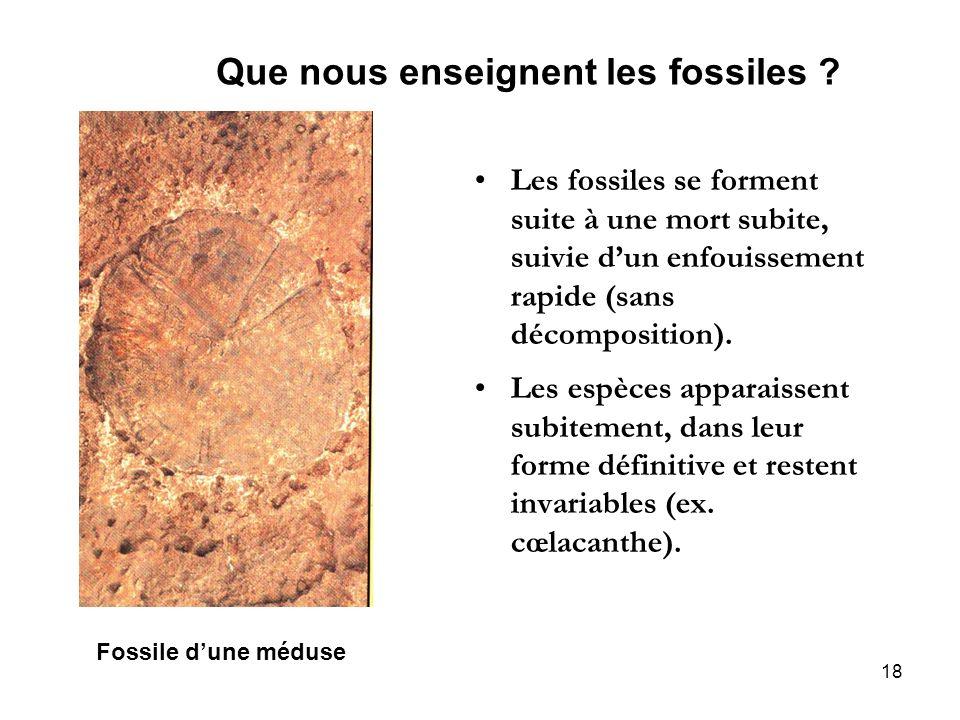 18 Que nous enseignent les fossiles ? Les fossiles se forment suite à une mort subite, suivie dun enfouissement rapide (sans décomposition). Les espèc