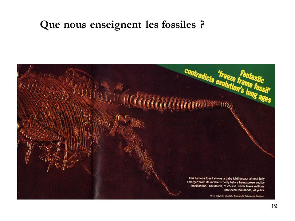 19 Que nous enseignent les fossiles ?