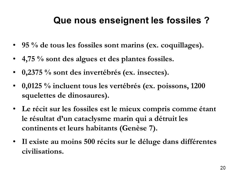 20 Que nous enseignent les fossiles ? 95 % de tous les fossiles sont marins (ex. coquillages). 4,75 % sont des algues et des plantes fossiles. 0,2375