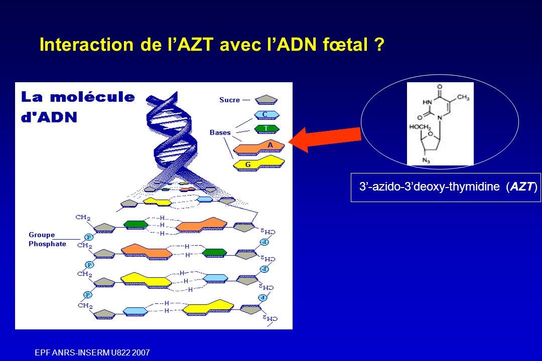 EPF ANRS-INSERM U822 2007 3-azido-3deoxy-thymidine (AZT) Interaction de lAZT avec lADN fœtal ?