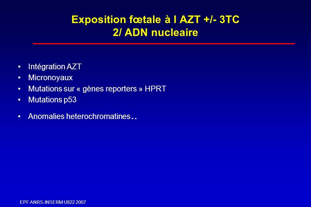EPF ANRS-INSERM U822 2007 Exposition fœtale à l AZT +/- 3TC 2/ ADN nucleaire Intégration AZT Micronoyaux Mutations sur « gènes reporters » HPRT Mutati