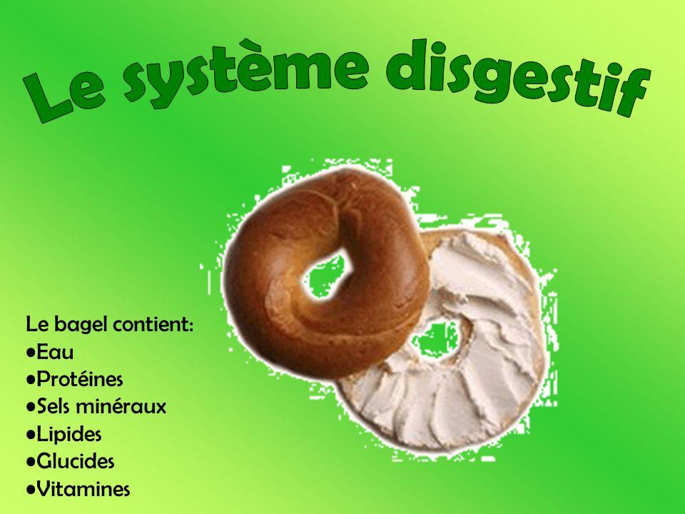 Le bagel contient: Eau Protéines Sels minéraux Lipides Glucides Vitamines