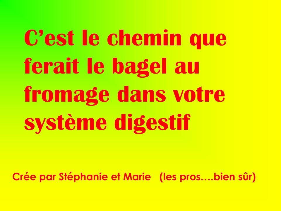 Cest le chemin que ferait le bagel au fromage dans votre système digestif Crée par Stéphanie et Marie (les pros….bien sûr)