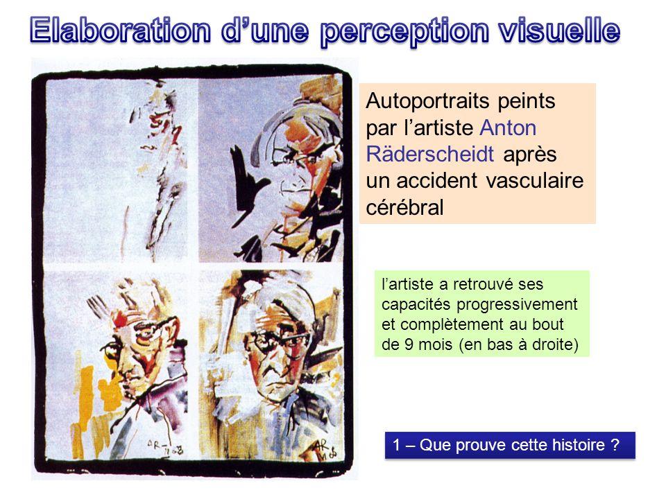 Autoportraits peints par lartiste Anton Räderscheidt après un accident vasculaire cérébral lartiste a retrouvé ses capacités progressivement et complètement au bout de 9 mois (en bas à droite) 1 – Que prouve cette histoire ?