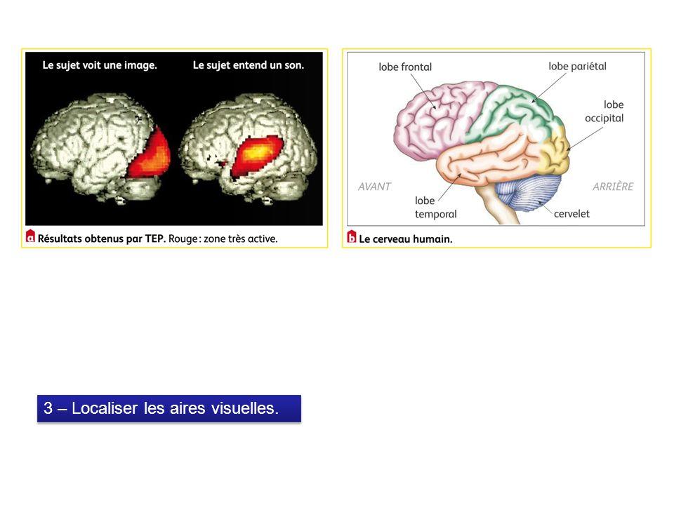 3 – Localiser les aires visuelles.