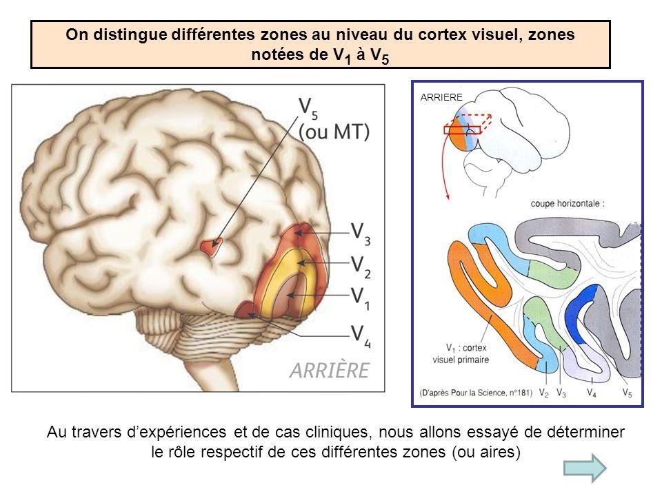 On distingue différentes zones au niveau du cortex visuel, zones notées de V 1 à V 5 Au travers dexpériences et de cas cliniques, nous allons essayé de déterminer le rôle respectif de ces différentes zones (ou aires) ARRIERE