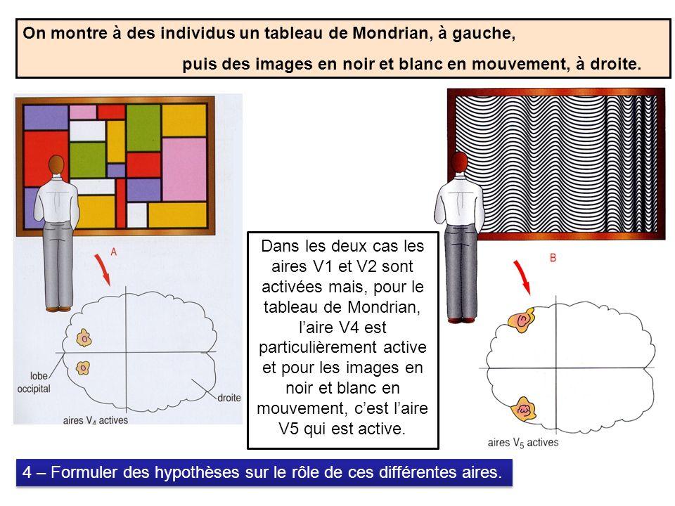 On montre à des individus un tableau de Mondrian, à gauche, puis des images en noir et blanc en mouvement, à droite.