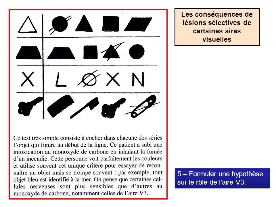 Les conséquences de lésions sélectives de certaines aires visuelles 5 – Formuler une hypothèse sur le rôle de laire V3.