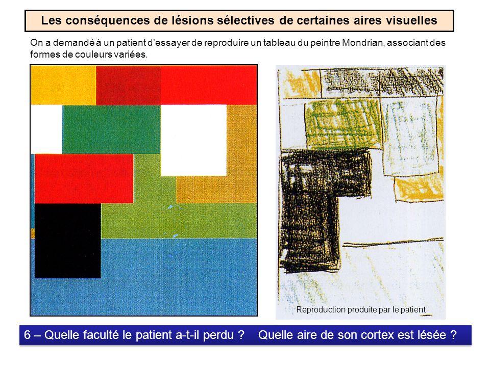 Les conséquences de lésions sélectives de certaines aires visuelles On a demandé à un patient dessayer de reproduire un tableau du peintre Mondrian, associant des formes de couleurs variées.