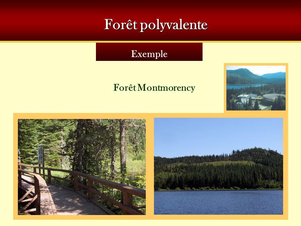 Exemple Forêt polyvalente Forêt Montmorency