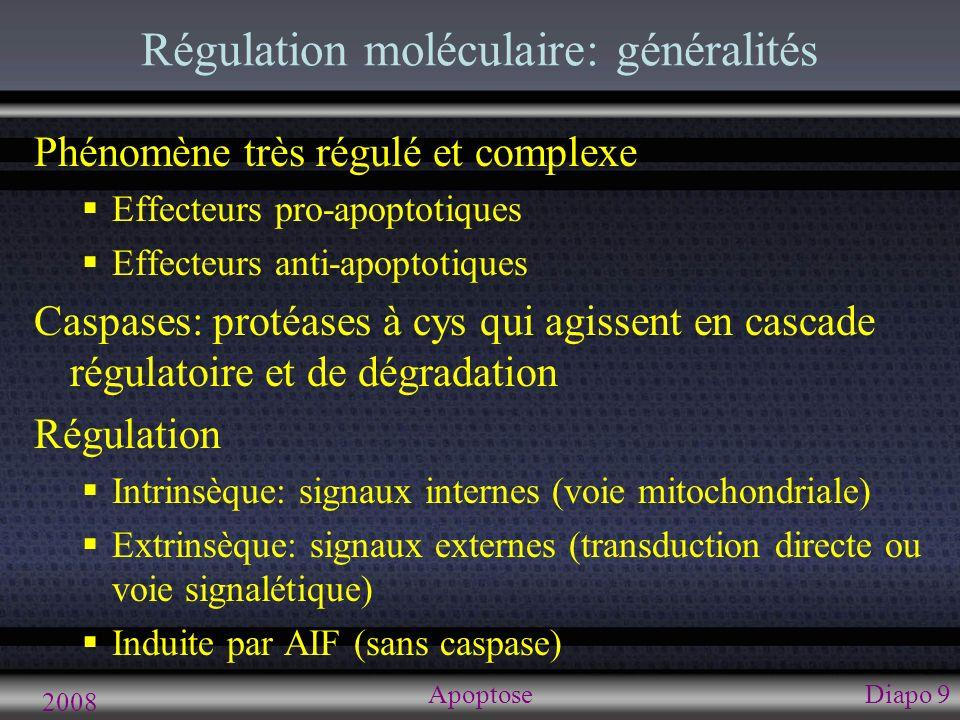 2008 ApoptoseDiapo 9 Régulation moléculaire: généralités Phénomène très régulé et complexe Effecteurs pro-apoptotiques Effecteurs anti-apoptotiques Ca