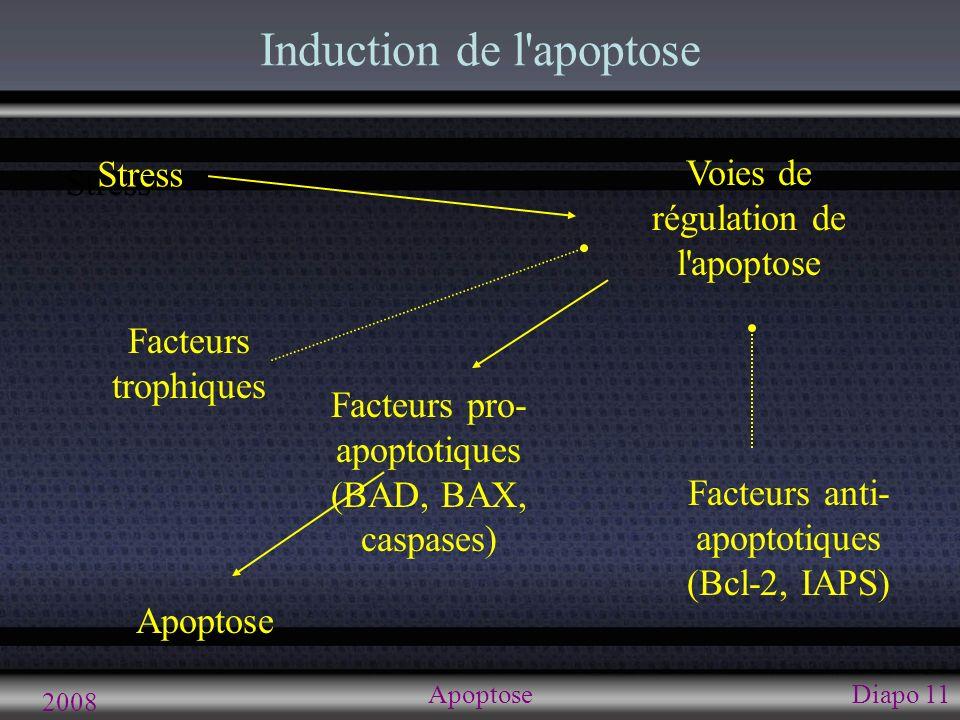2008 ApoptoseDiapo 11 Induction de l'apoptose Stress Facteurs anti- apoptotiques (Bcl-2, IAPS) Apoptose Voies de régulation de l'apoptose Facteurs pro