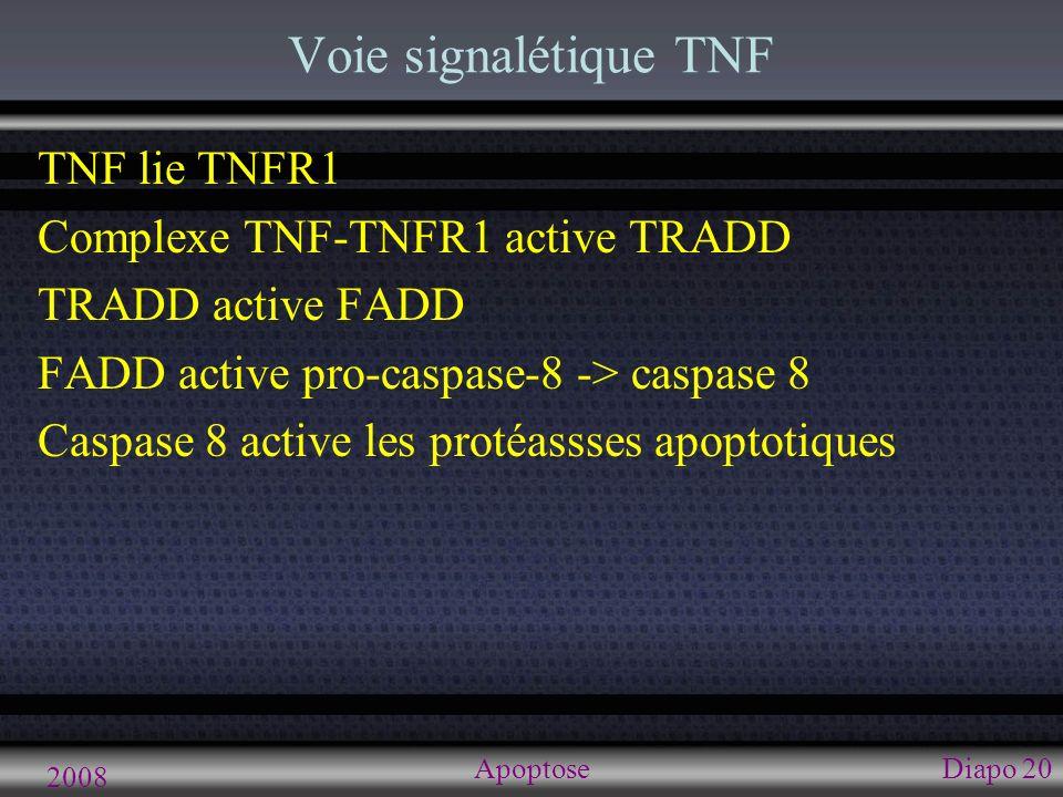 2008 ApoptoseDiapo 20 Voie signalétique TNF TNF lie TNFR1 Complexe TNF-TNFR1 active TRADD TRADD active FADD FADD active pro-caspase-8 -> caspase 8 Cas