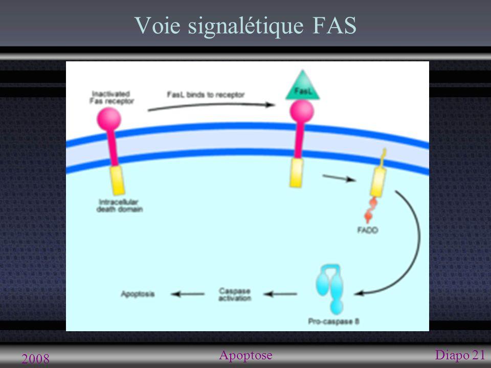2008 ApoptoseDiapo 21 Voie signalétique FAS
