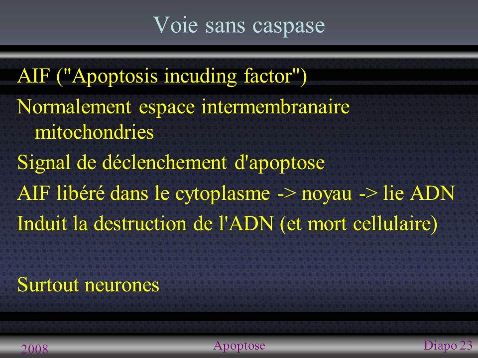 2008 ApoptoseDiapo 23 Voie sans caspase AIF (