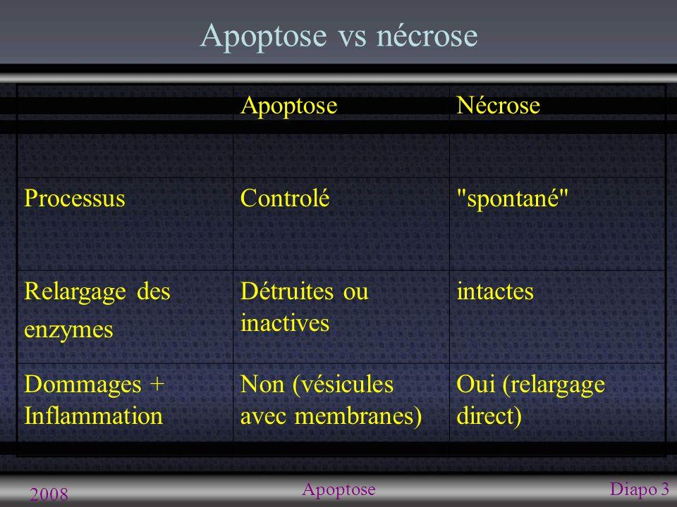 2008 ApoptoseDiapo 3 Apoptose vs nécrose ApoptoseNécrose ProcessusControlé