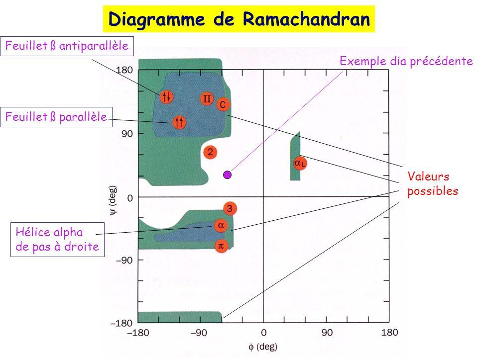 Exemple dia précédente Feuillet ß antiparallèle Feuillet ß parallèle Hélice alpha de pas à droite Valeurs possibles Diagramme de Ramachandran