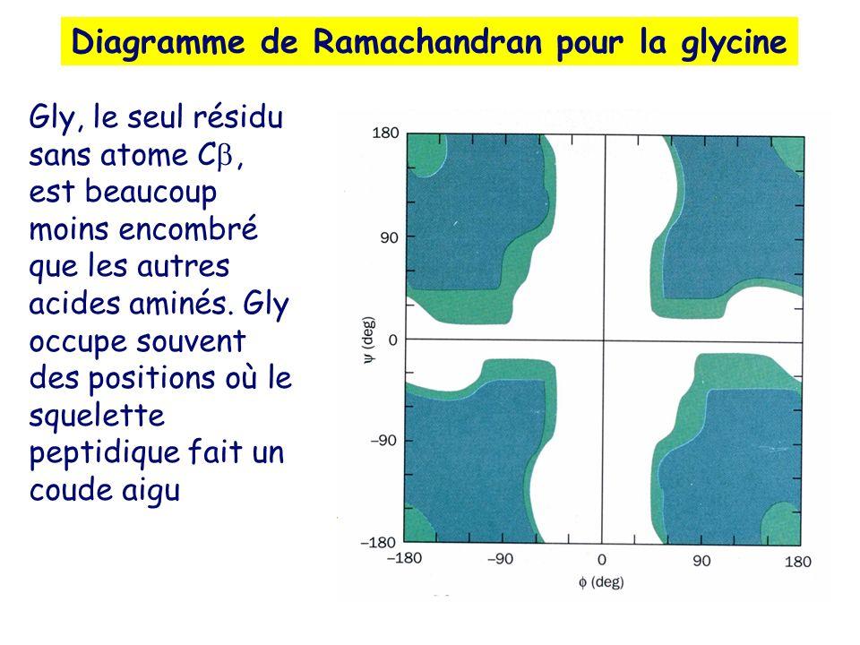 Diagramme de Ramachandran pour la glycine Gly, le seul résidu sans atome C, est beaucoup moins encombré que les autres acides aminés. Gly occupe souve