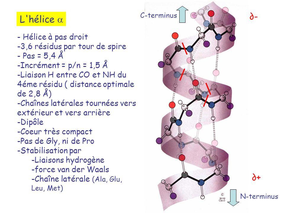 L'hélice - Hélice à pas droit -3,6 résidus par tour de spire - Pas = 5,4 Å -Incrément = p/n = 1,5 Å -Liaison H entre CO et NH du 4éme résidu ( distanc