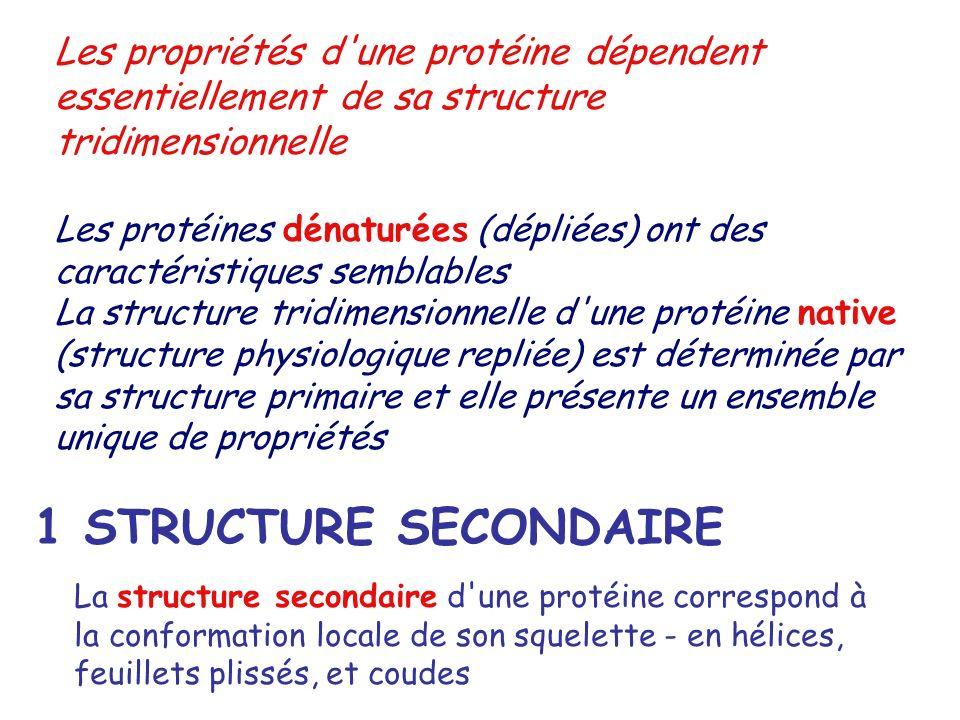 Les propriétés d'une protéine dépendent essentiellement de sa structure tridimensionnelle Les protéines dénaturées (dépliées) ont des caractéristiques