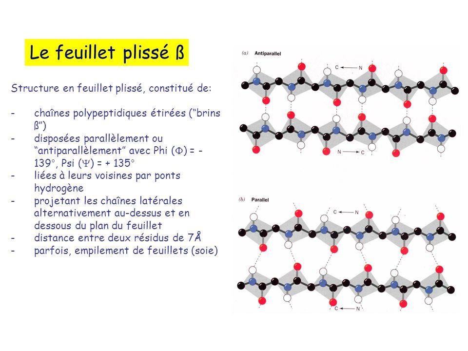 Le feuillet plissé ß Structure en feuillet plissé, constitué de: -chaînes polypeptidiques étirées (brins ß) -disposées parallèlement ou antiparallèlem
